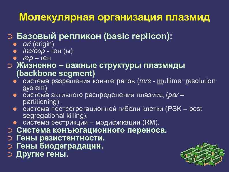 Молекулярная организация плазмид ➲ Базовый репликон (basic replicon): ➲ ori (origin) inc/cop - ген