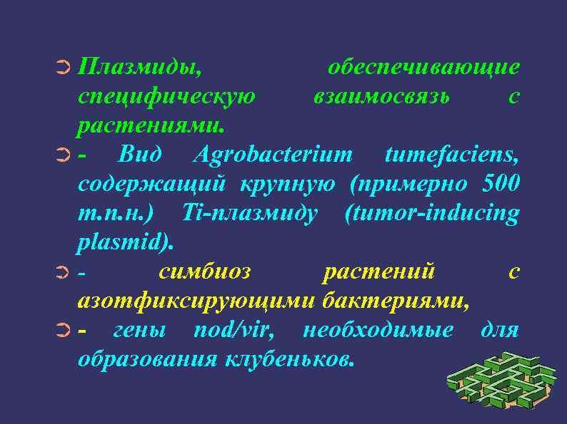 ➲ Плазмиды, обеспечивающие взаимосвязь с специфическую растениями. ➲Вид Agrobacterium tumefaciens, содержащий крупную (примерно 500