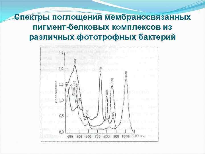 Спектры поглощения мембраносвязанных пигмент-белковых комплексов из различных фототрофных бактерий