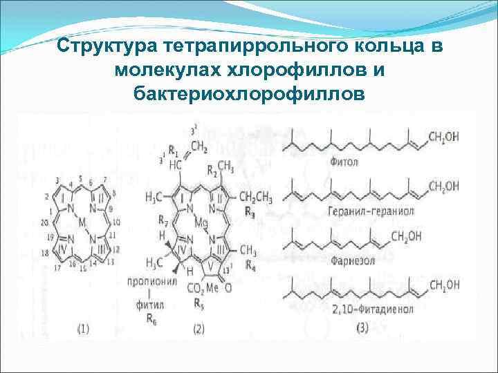 Структура тетрапиррольного кольца в молекулах хлорофиллов и бактериохлорофиллов