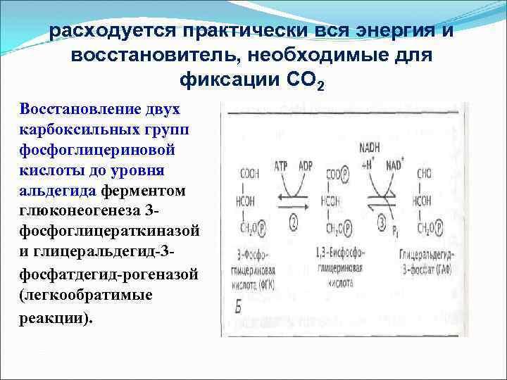 расходуется практически вся энергия и восстановитель, необходимые для фиксации СО 2 Восстановление двух карбоксильных