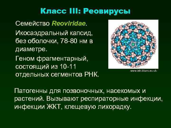 Класс III: Реовирусы Семейство Reoviridae. Икосаэдральный капсид, без оболочки, 78 -80 нм в диаметре.