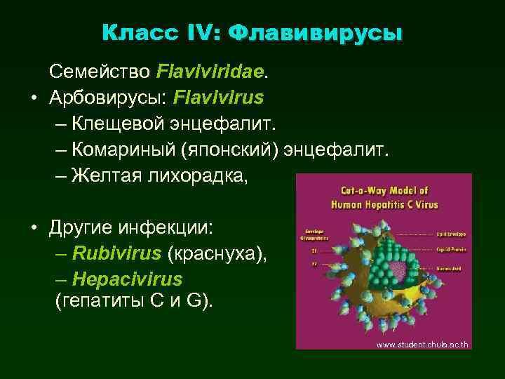 Класс IV: Флавивирусы Семейство Flaviviridae. • Арбовирусы: Flavivirus – Клещевой энцефалит. – Комариный (японский)