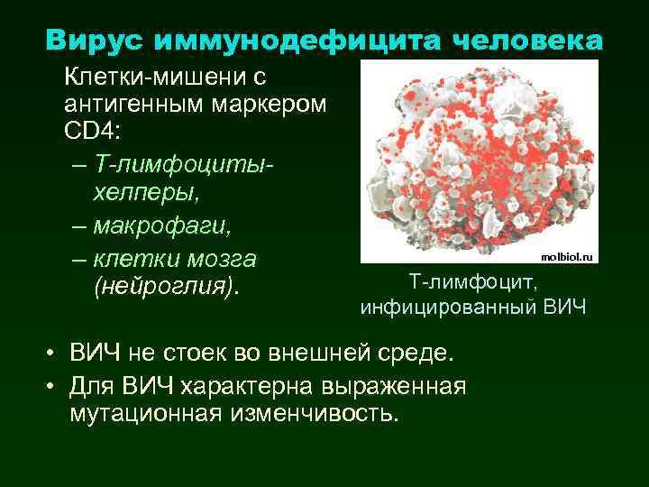 Вирус иммунодефицита человека Клетки-мишени с антигенным маркером CD 4: – Т-лимфоцитыхелперы, – макрофаги, –