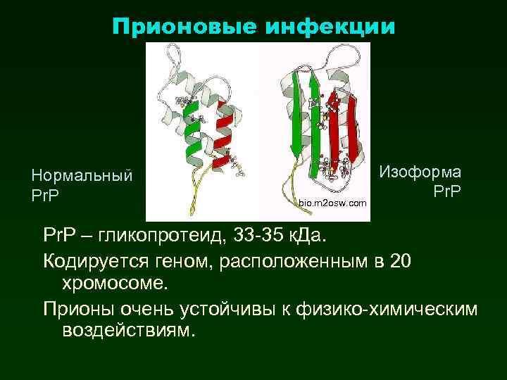 Прионовые инфекции Нормальный Pr. P bio. m 2 osw. com Изоформа Pr. P –