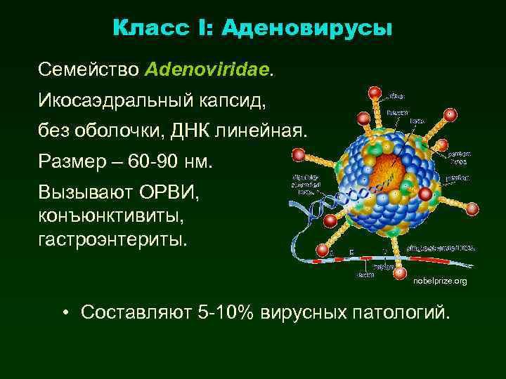 Класс I: Аденовирусы Семейство Adenoviridae. Икосаэдральный капсид, без оболочки, ДНК линейная. Размер – 60