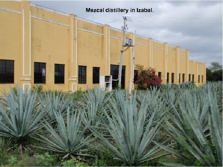 Mezcal distillery in Izabal.