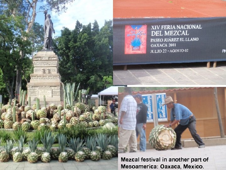 Mezcal festival in another part of Mesoamerica: Oaxaca, Mexico.