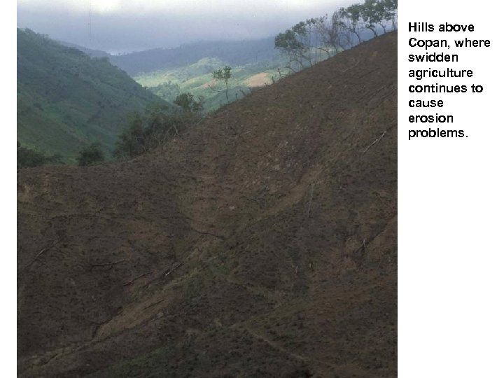 Hills above Copan, where swidden agriculture continues to cause erosion problems.