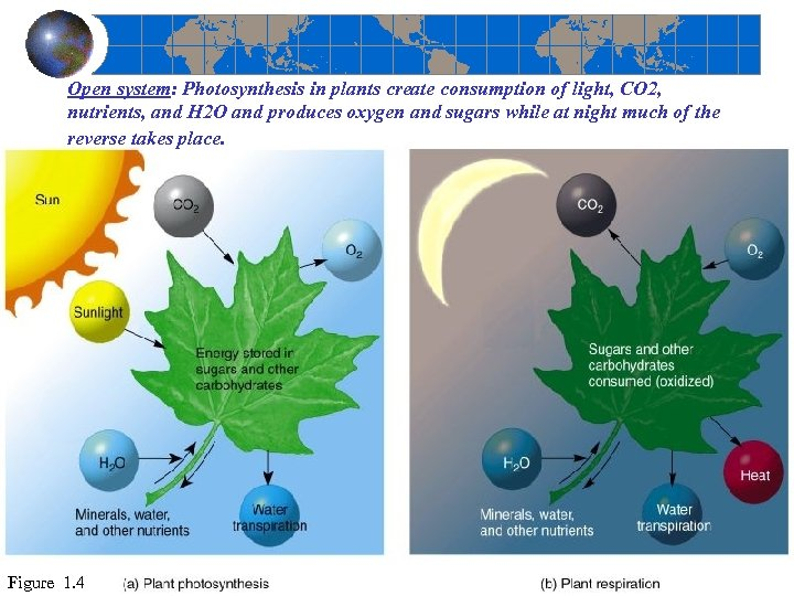 Open system: Photosynthesis in plants create consumption of light, CO 2, nutrients, and H