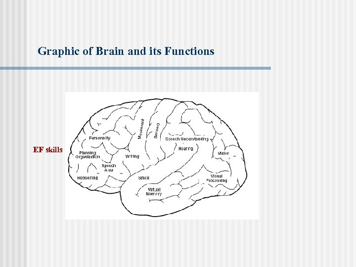 Graphic of Brain and its Functions EF skills