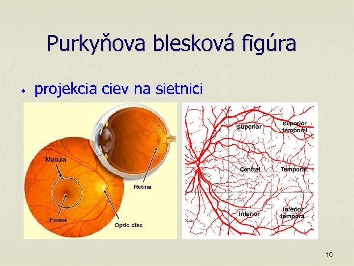 Purkyňova blesková figúra • projekcia ciev na sietnici 10