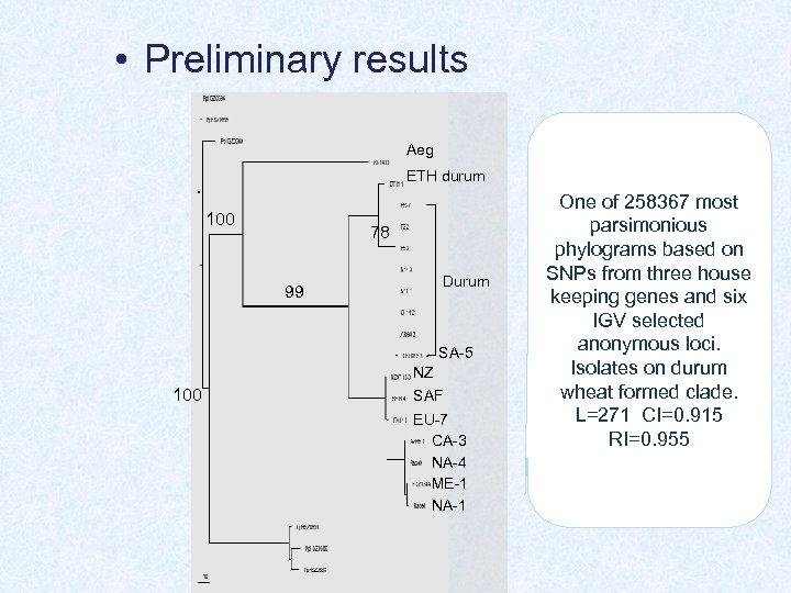 • Preliminary results Aeg ETH durum 100 78 Durum 99 SA-5 NZ 100