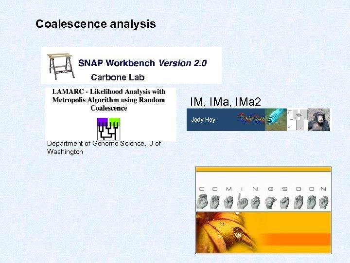 Coalescence analysis Carbone Lab IM, IMa 2 Department of Genome Science, U of Washington