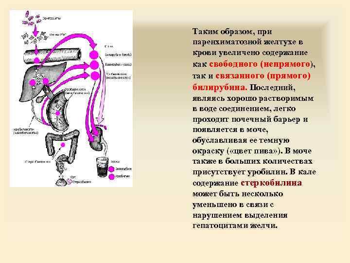Таким образом, при паренхиматозной желтухе в крови увеличено содержание как свободного (непрямого), так и