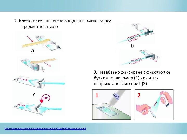 2. Клетките се нанасят във вид на намазка върху предметно стъкло b a c