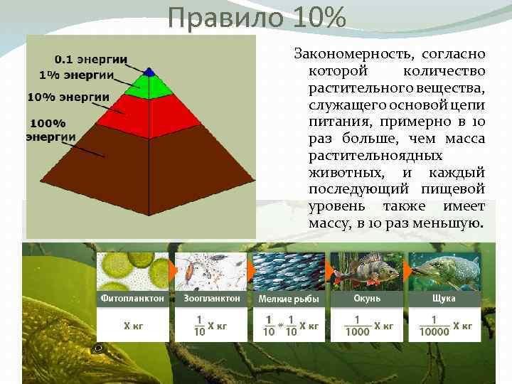 Правило 10% Закономерность, согласно которой количество растительного вещества, служащего основой цепи питания, примерно в