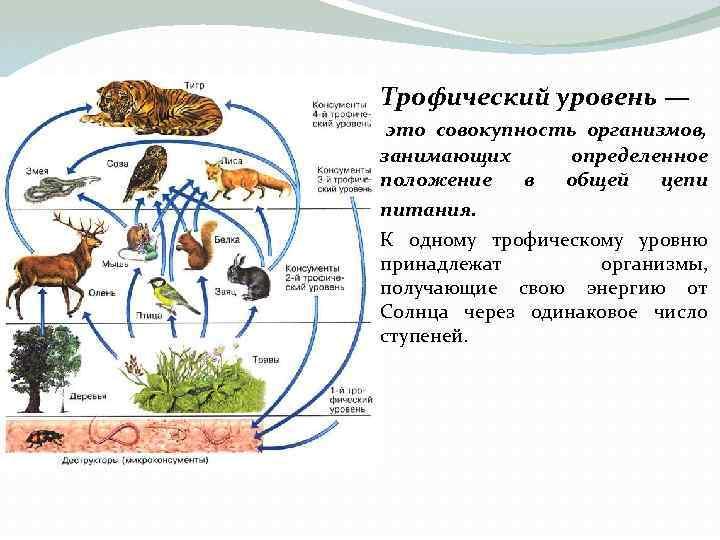 Трофический уровень — это совокупность организмов, занимающих положение в питания. определенное общей цепи