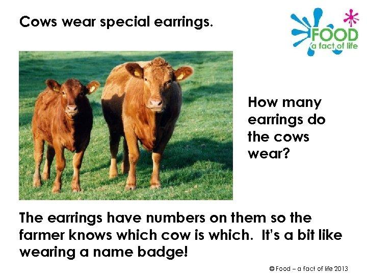Cows wear special earrings. How many earrings do the cows wear? The earrings have