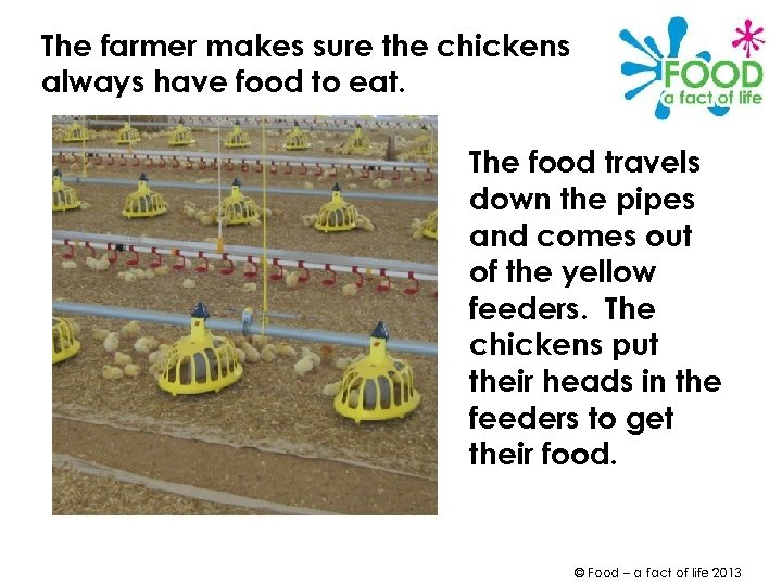 The farmer makes sure the chickens always have food to eat. The food travels