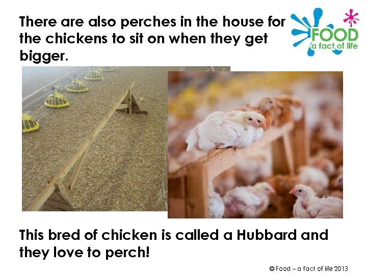 There also perches in the house for the chickens to sit on when they