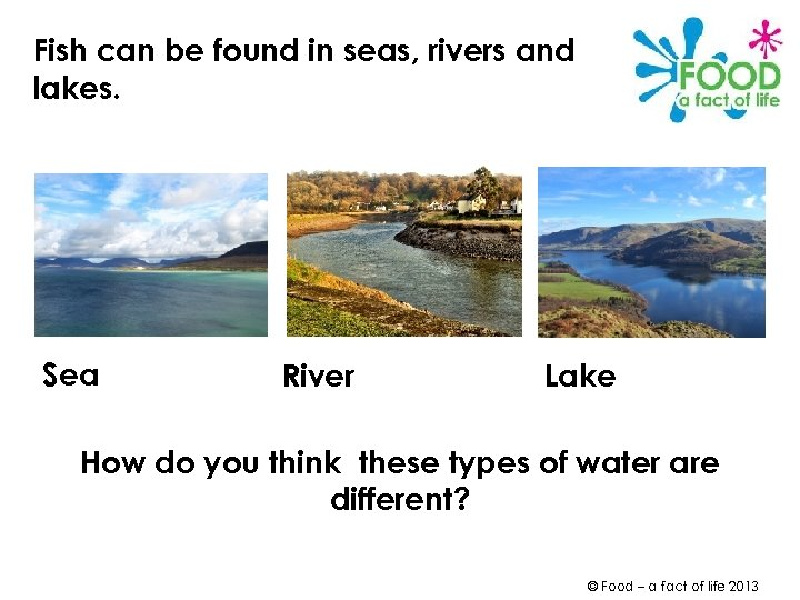 Fish can be found in seas, rivers and lakes. Sea River Lake How do