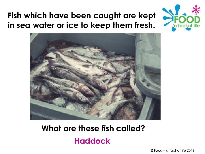 Fish which have been caught are kept in sea water or ice to keep