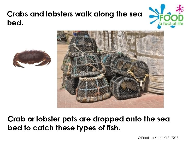 Crabs and lobsters walk along the sea bed. Crab or lobster pots are dropped