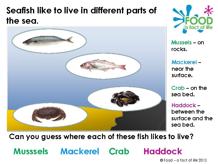 Seafish like to live in different parts of the sea. Mussels – on rocks.