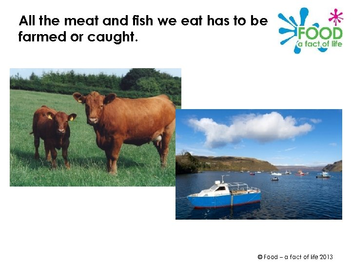 All the meat and fish we eat has to be farmed or caught. ©