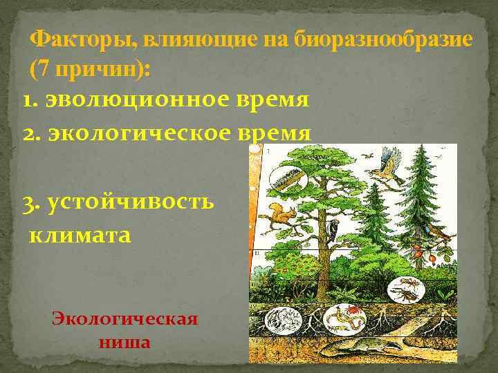 Факторы, влияющие на биоразнообразие (7 причин): 1. эволюционное время 2. экологическое время 3. устойчивость