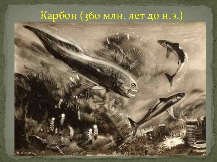 Карбон (360 млн. лет до н. э. )