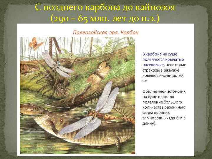 С позднего карбона до кайнозоя (290 – 65 млн. лет до н. э. )