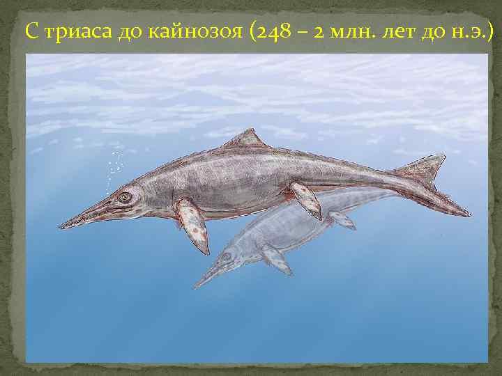 С триаса до кайнозоя (248 – 2 млн. лет до н. э. )