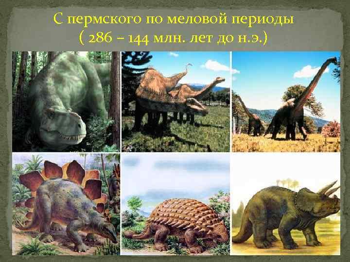 С пермского по меловой периоды ( 286 – 144 млн. лет до н. э.