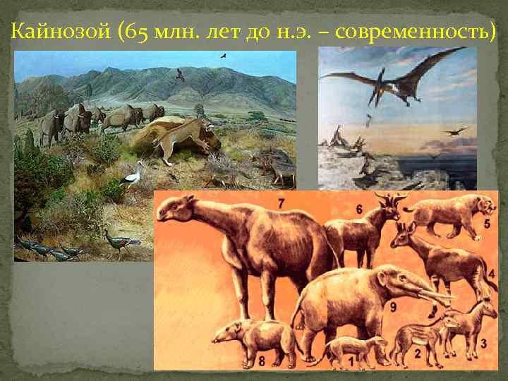 Кайнозой (65 млн. лет до н. э. – современность)