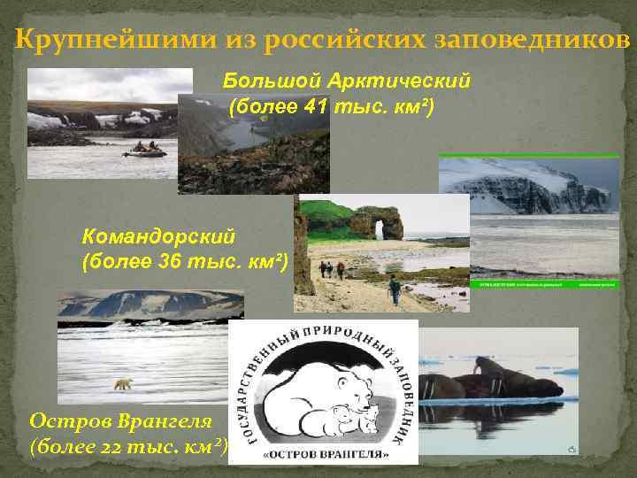Крупнейшими из российских заповедников Большой Арктический (более 41 тыс. км²) Командорский (более 36 тыс.