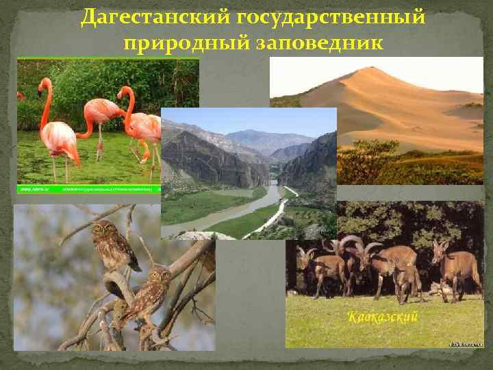 Дагестанский государственный природный заповедник