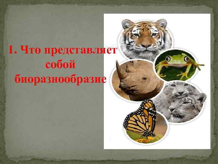 1. Что представляет собой биоразнообразие