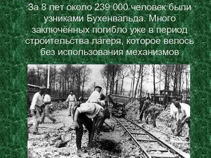 За 8 лет около 239 000 человек были узниками Бухенвальда. Много заключённых погибло уже