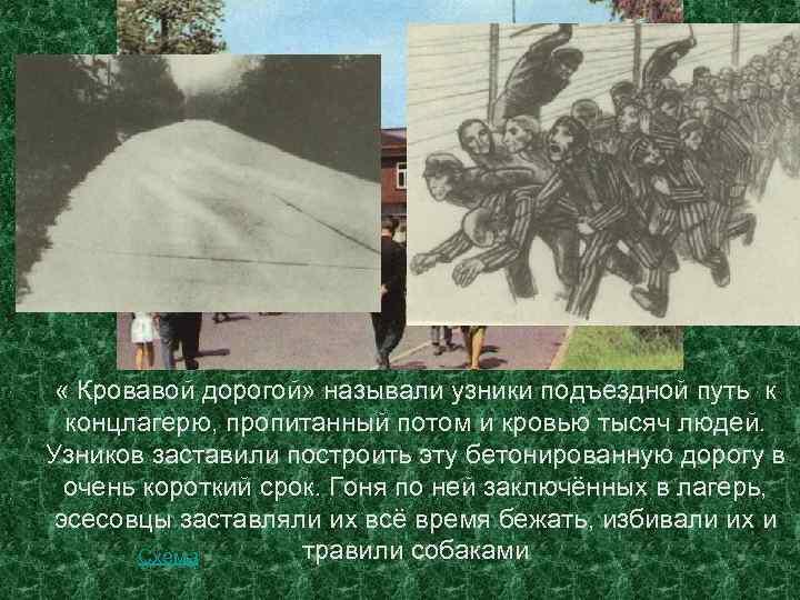 « Кровавой дорогой» называли узники подъездной путь к концлагерю, пропитанный потом и кровью