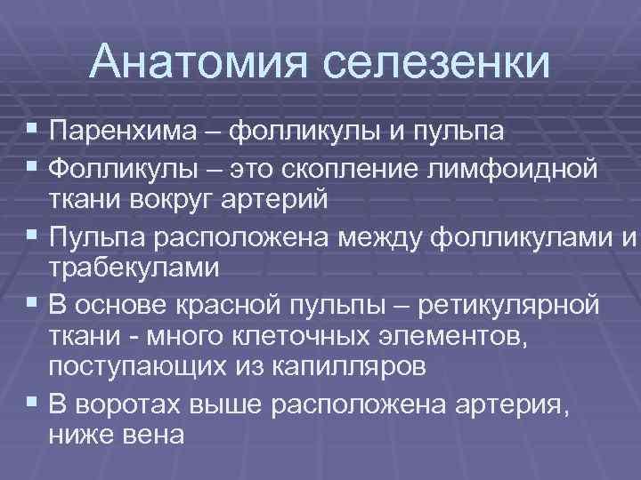 Анатомия селезенки § Паренхима – фолликулы и пульпа § Фолликулы – это скопление лимфоидной