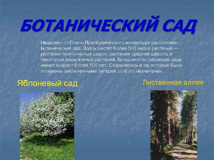 БОТАНИЧЕСКИЙ САД Недалеко от Спасо-Преображенского монастыря расположен Ботанический сад. Здесь растет более 500 видов