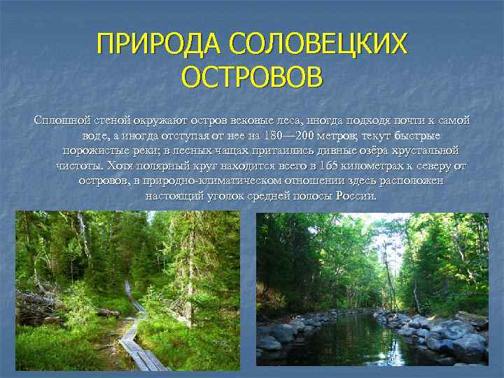 ПРИРОДА СОЛОВЕЦКИХ ОСТРОВОВ Сплошной стеной окружают остров вековые леса, иногда подходя почти к самой