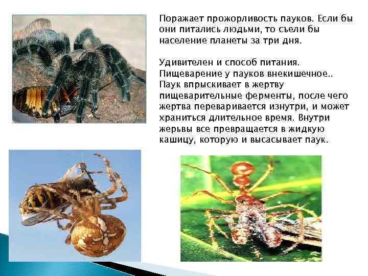 Поражает прожорливость пауков. Если бы они питались людьми, то съели бы население планеты за