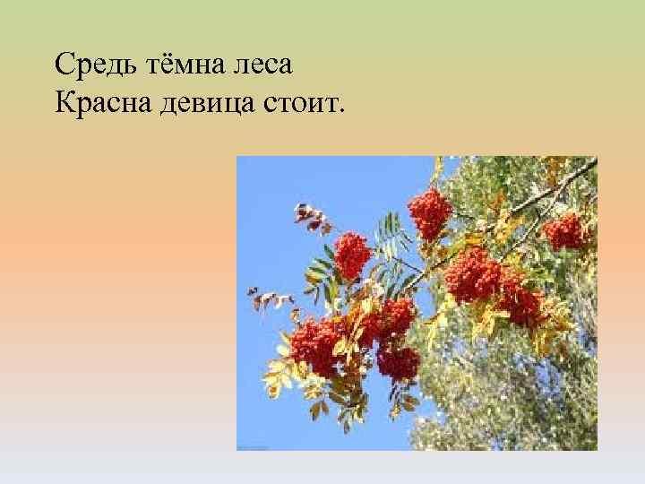Средь тёмна леса Красна девица стоит.