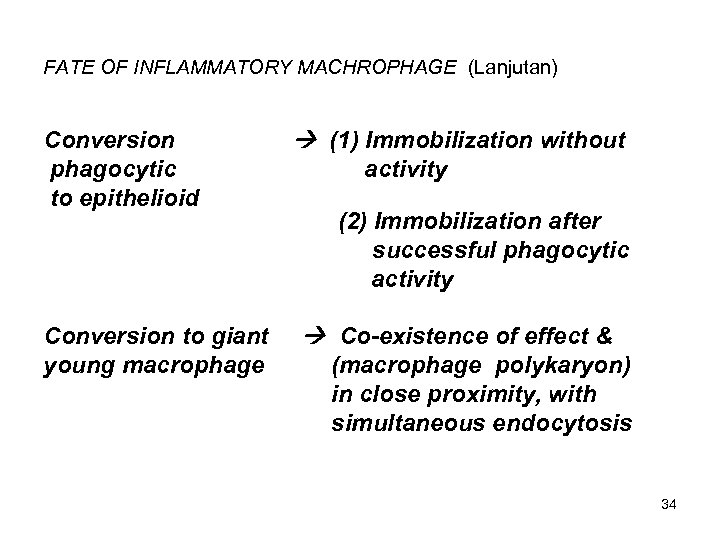 FATE OF INFLAMMATORY MACHROPHAGE (Lanjutan) Conversion phagocytic to epithelioid Conversion to giant young macrophage
