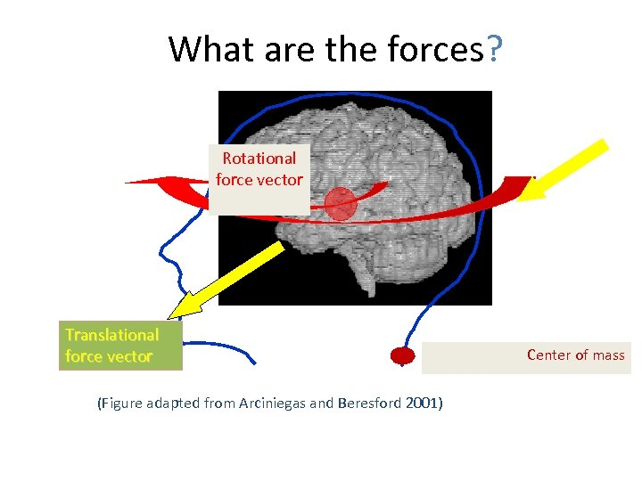 What are the forces? Rotational force vector Translational force vector (Figure adapted from Arciniegas