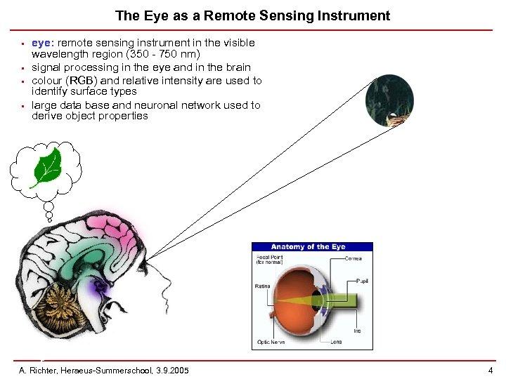 The Eye as a Remote Sensing Instrument • • eye: remote sensing instrument in