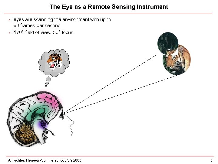 The Eye as a Remote Sensing Instrument • • eyes are scanning the environment